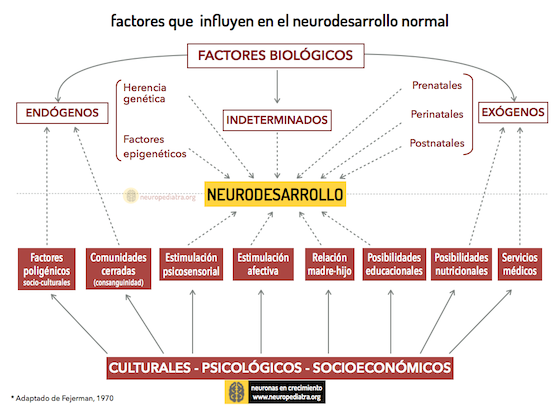 Neurodesarrollo factores